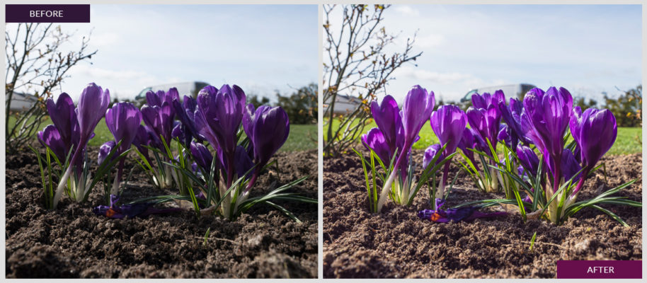 I'm offering this lightroom preset for free. This presetadds more colors to your springtime photos and boosts the purple color.    This free lightroom preset gives your pictures a colorfulmatte effect and…